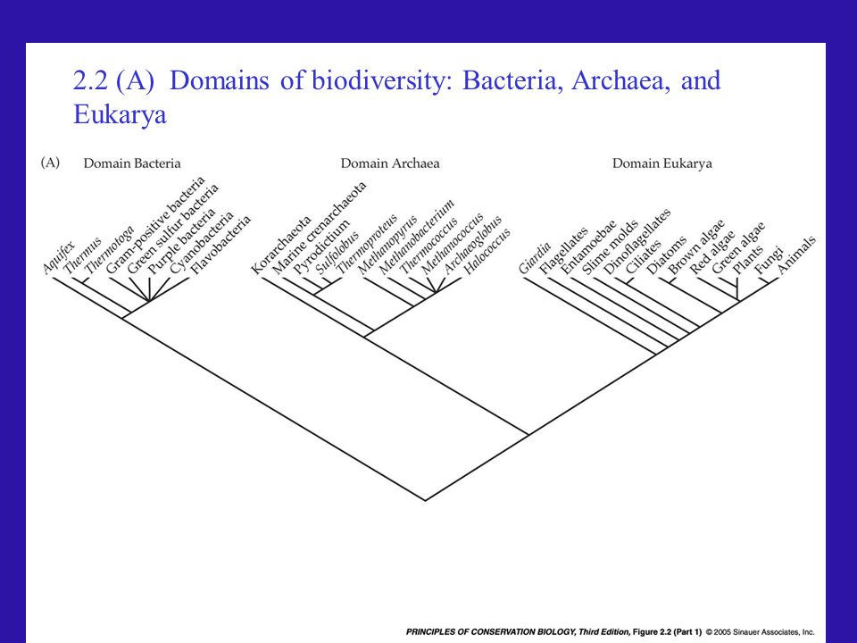 2.2 (A) Domains of biodiversity: Bacteria, Archaea, and Eukarya
