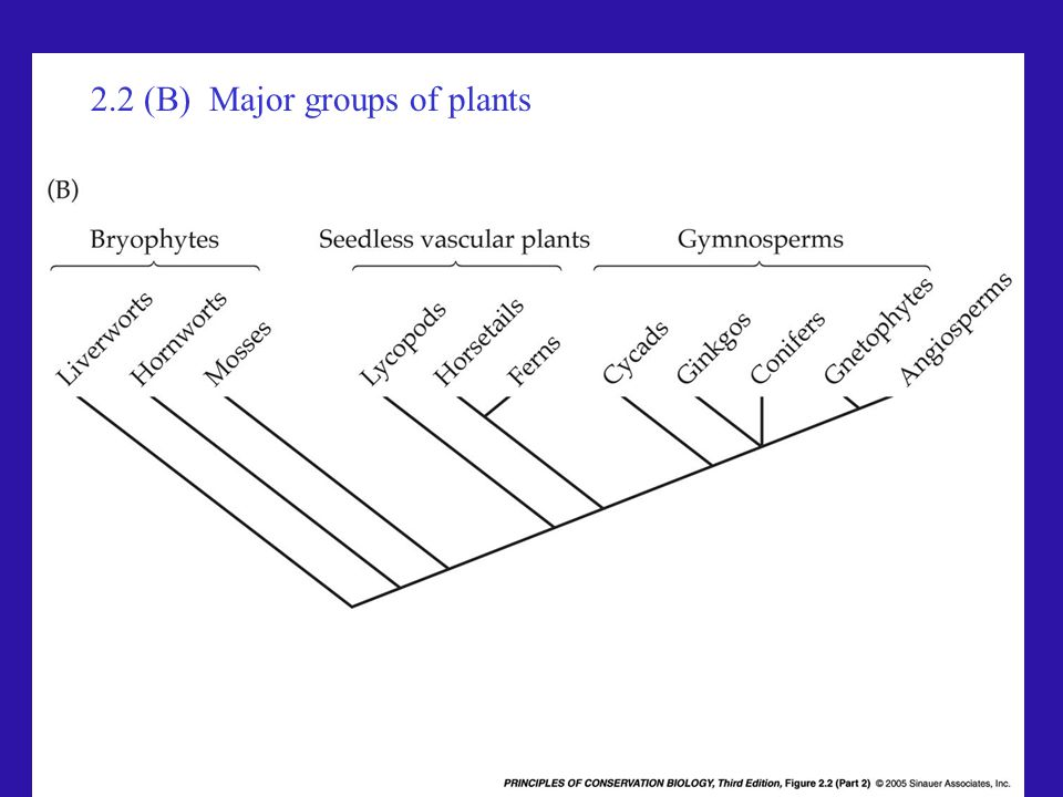 2.2 (B) Major groups of plants