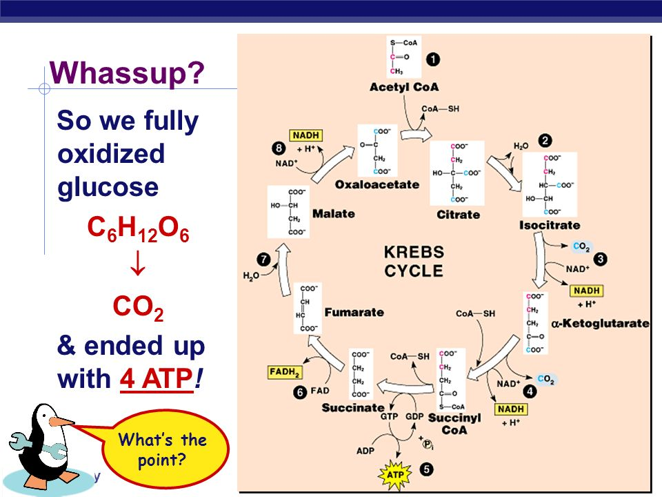 Whassup So we fully oxidized glucose C6H12O6  CO2