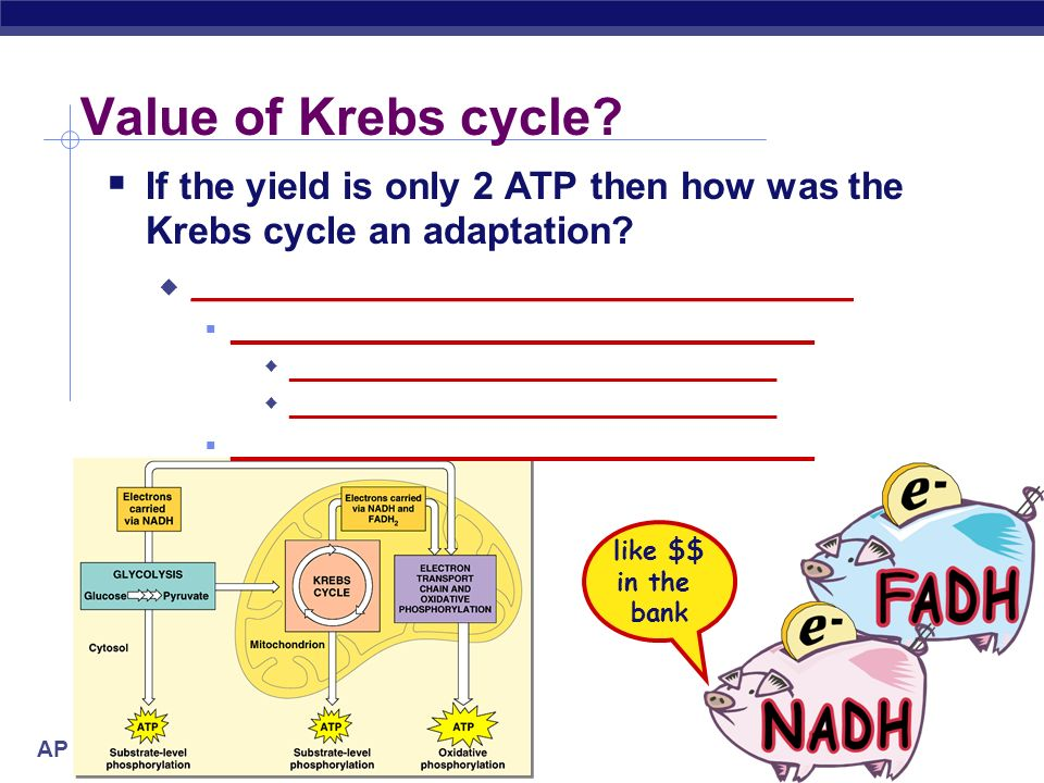 Value of Krebs cycle If the yield is only 2 ATP then how was the Krebs cycle an adaptation __________________________________.