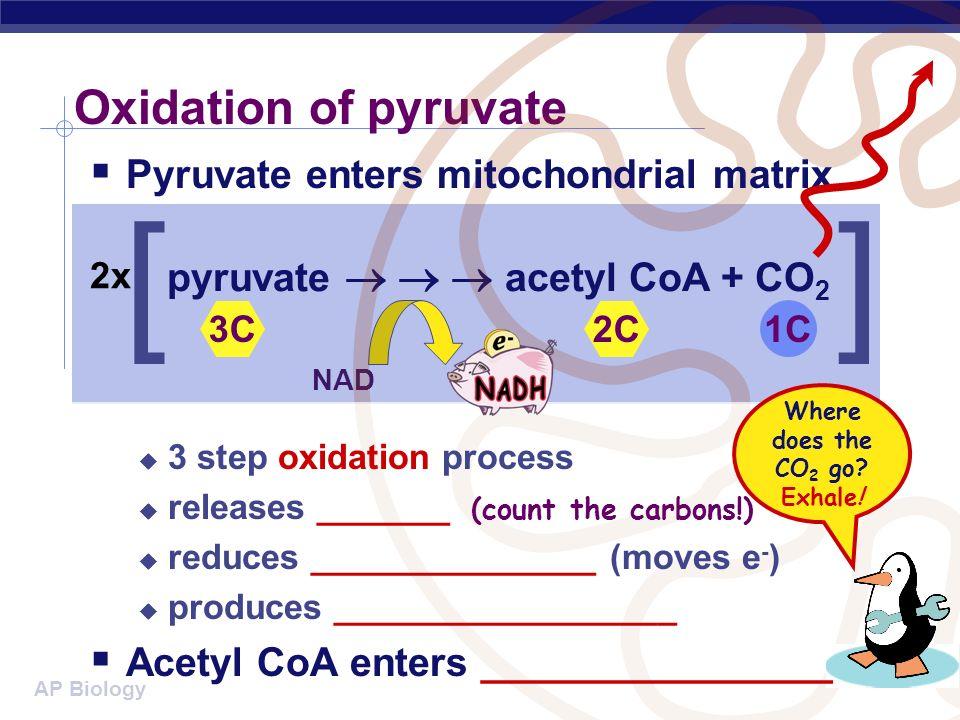 pyruvate    acetyl CoA + CO2