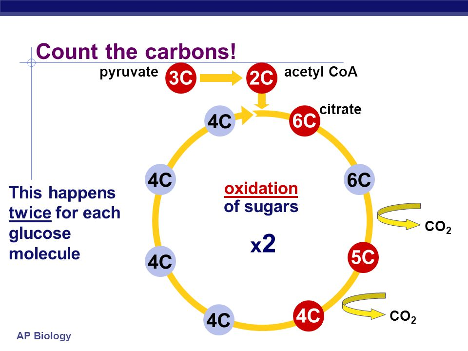 Count the carbons! x2 3C 2C 4C 6C 4C 6C 5C 4C 4C 4C