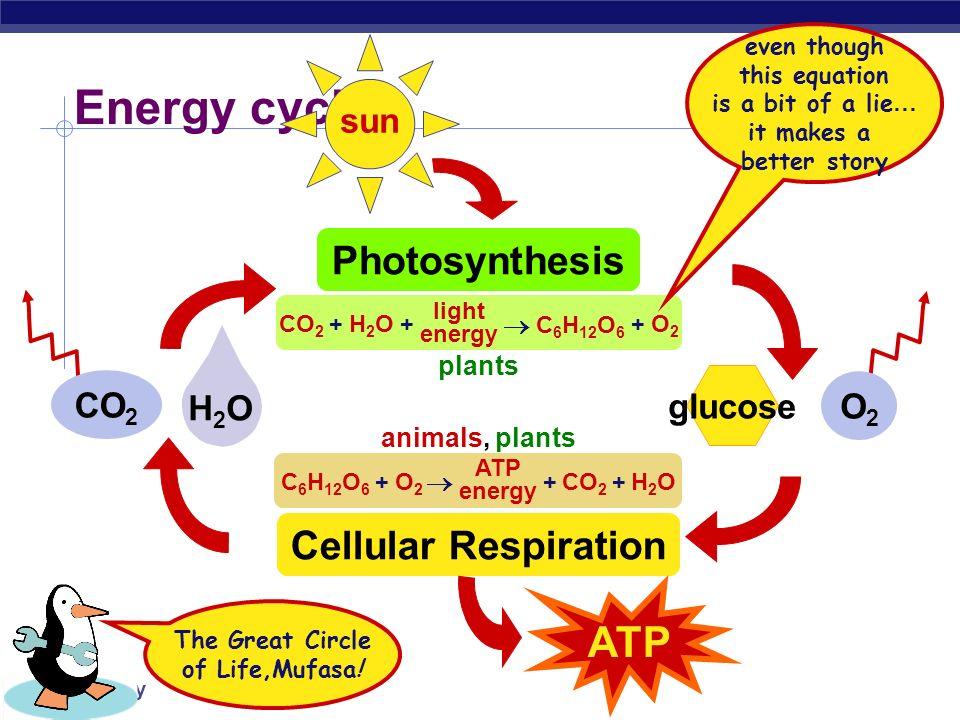 Energy cycle ATP Photosynthesis Cellular Respiration sun CO2 O2 H2O