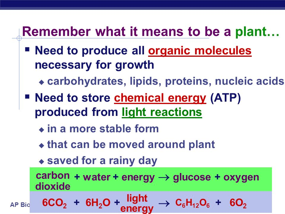 Remember what it means to be a plant…