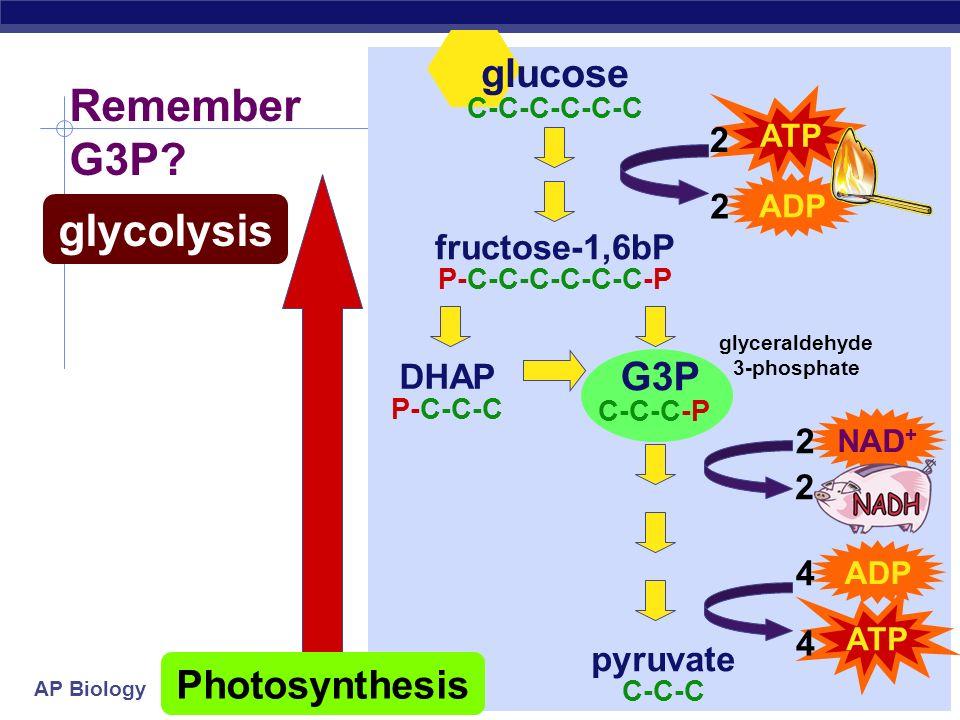 glyceraldehyde 3-phosphate