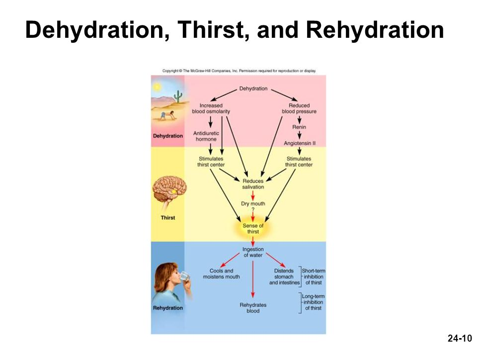 Dehydration, Thirst, and Rehydration
