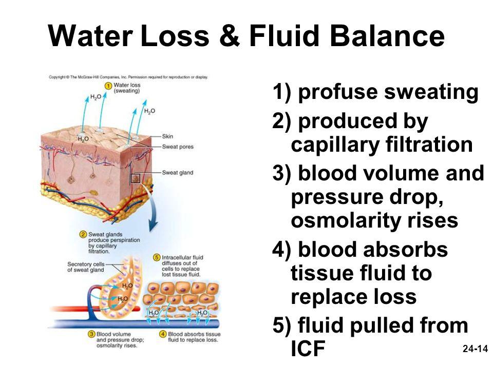 Water Loss & Fluid Balance