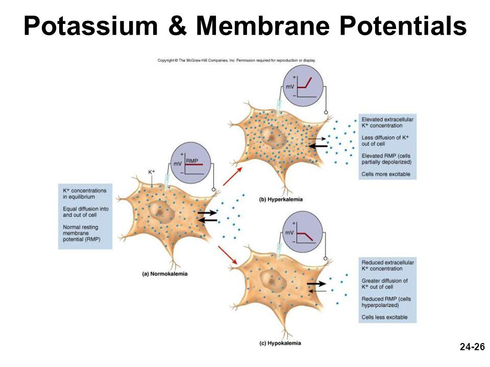 Potassium & Membrane Potentials