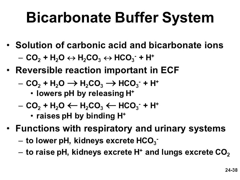 Bicarbonate Buffer System
