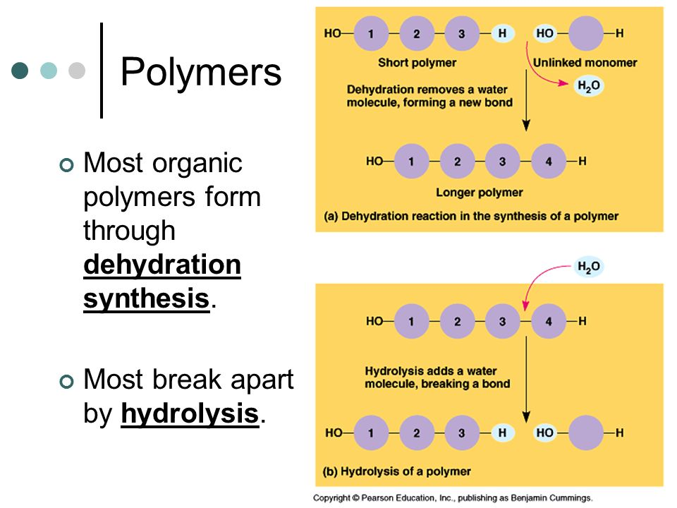 Polymers Most organic polymers form through dehydration synthesis.