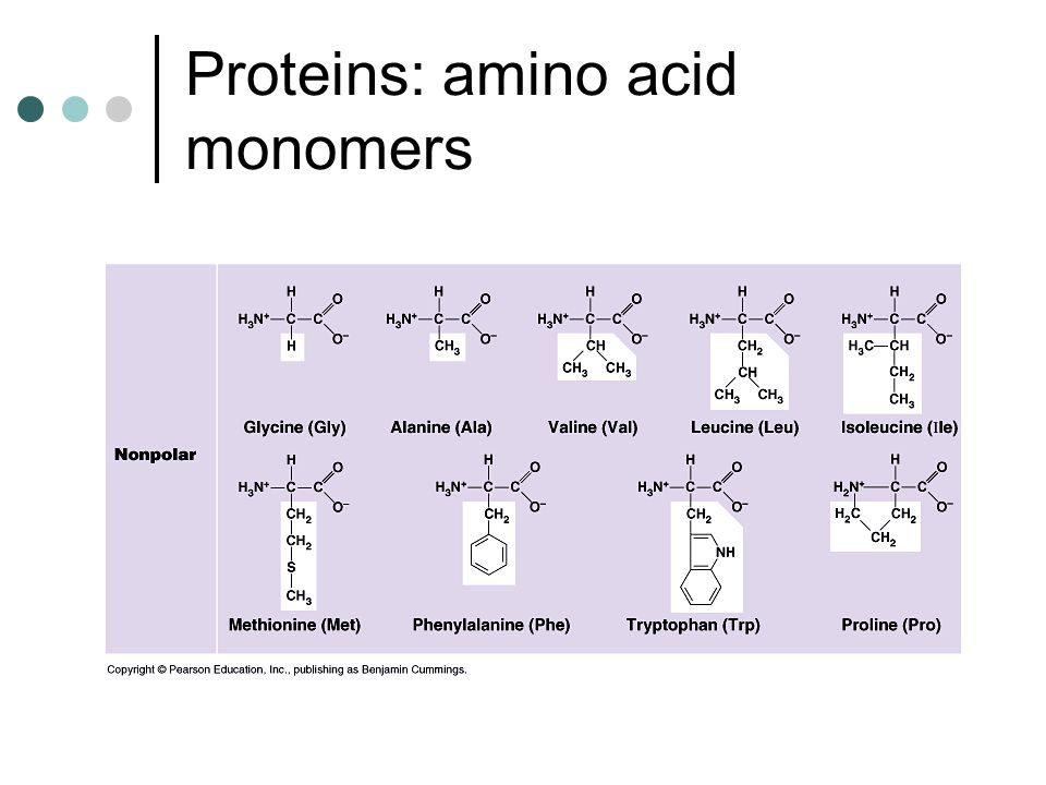 Proteins: amino acid monomers