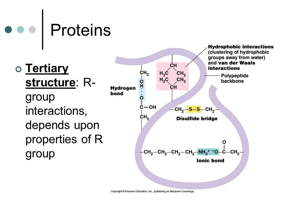 Proteins Tertiary structure: R-group interactions, depends upon properties of R group