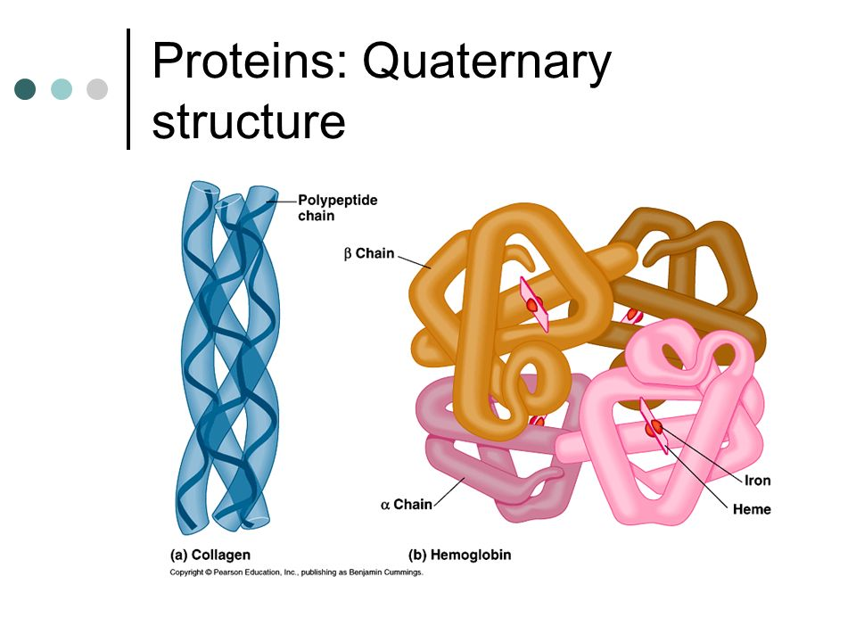 Proteins: Quaternary structure