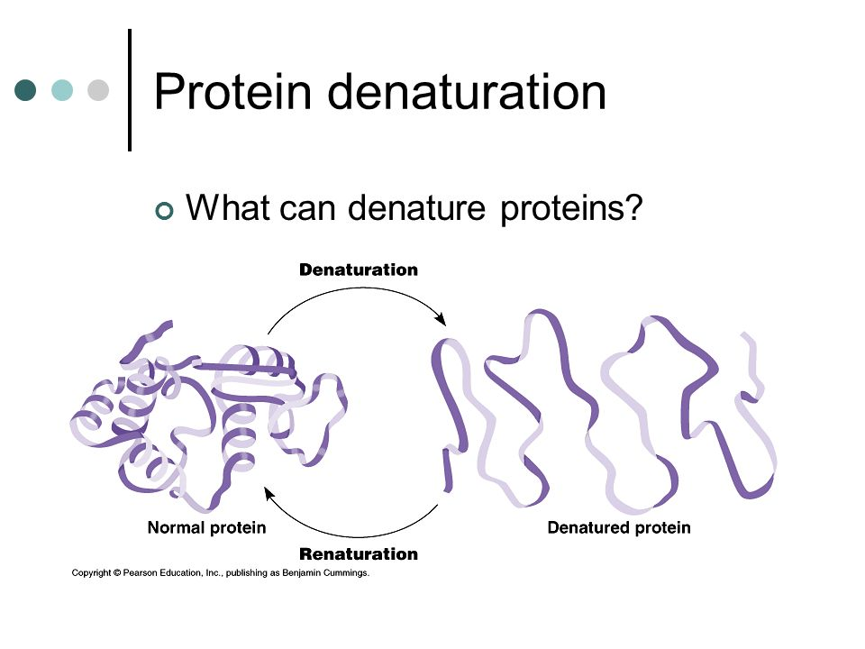 Protein denaturation What can denature proteins