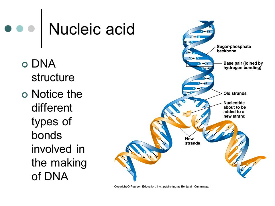 Nucleic acid DNA structure