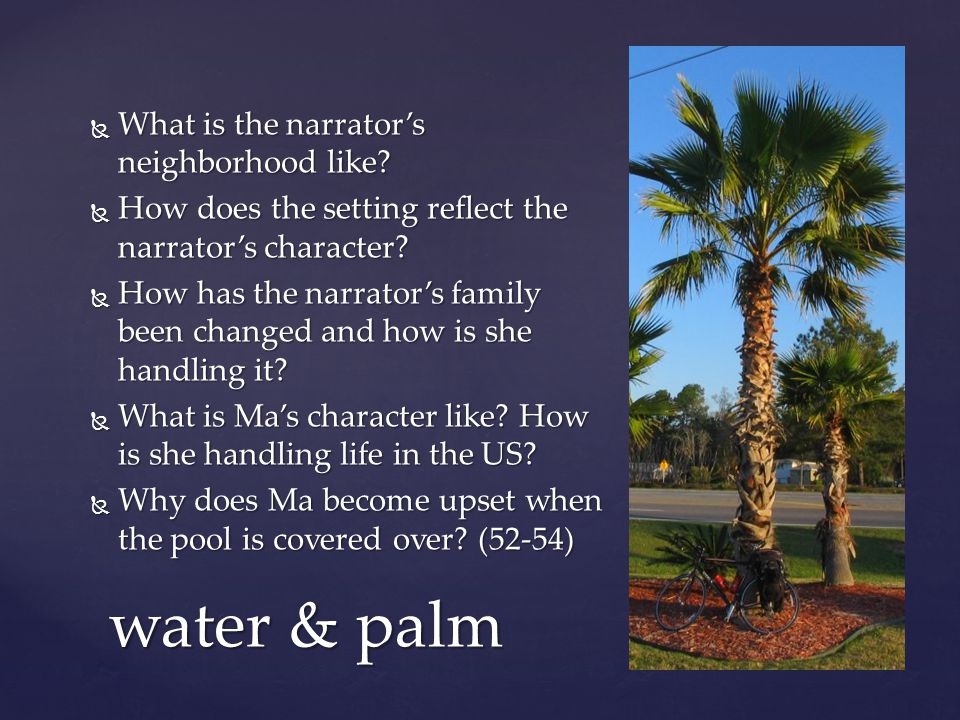 water & palm What is the narrator's neighborhood like