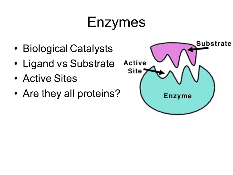 Enzymes Biological Catalysts Ligand vs Substrate Active Sites
