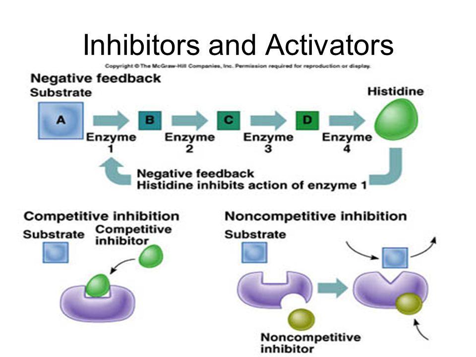 Inhibitors and Activators