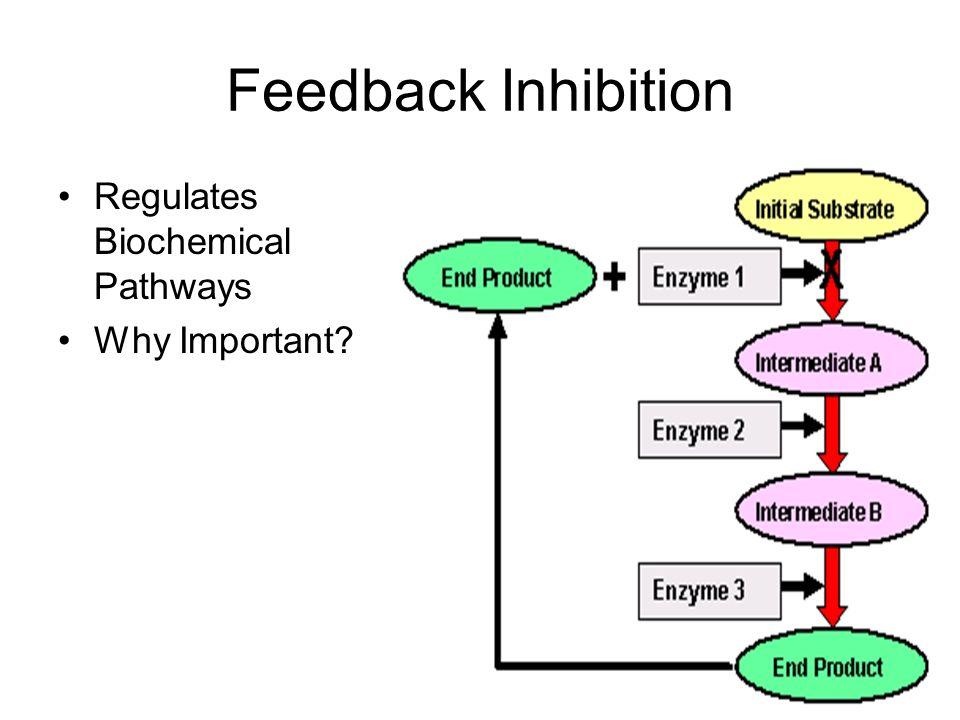 Feedback Inhibition Regulates Biochemical Pathways Why Important