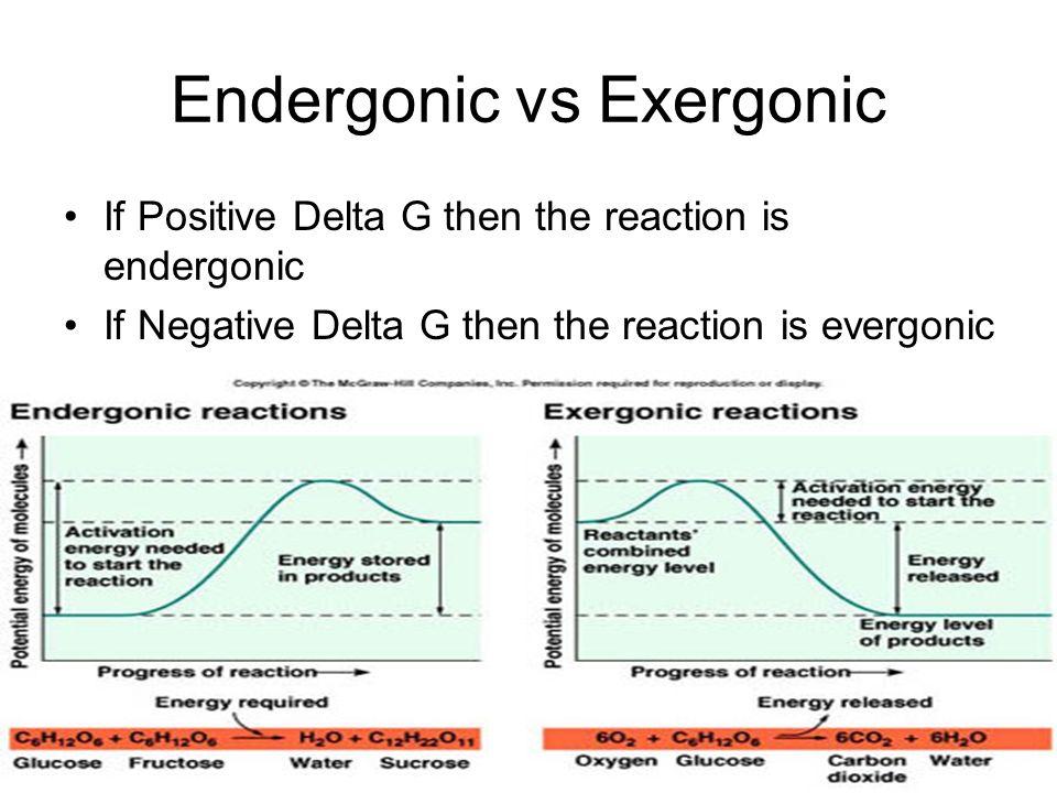 Endergonic vs Exergonic
