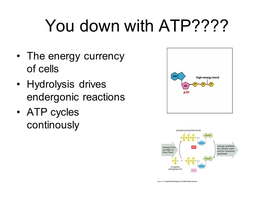 You down with ATP The energy currency of cells