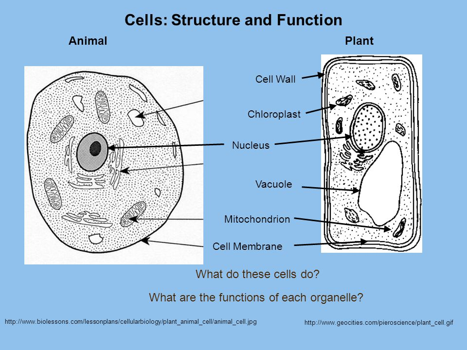 Cells: Structure and Function