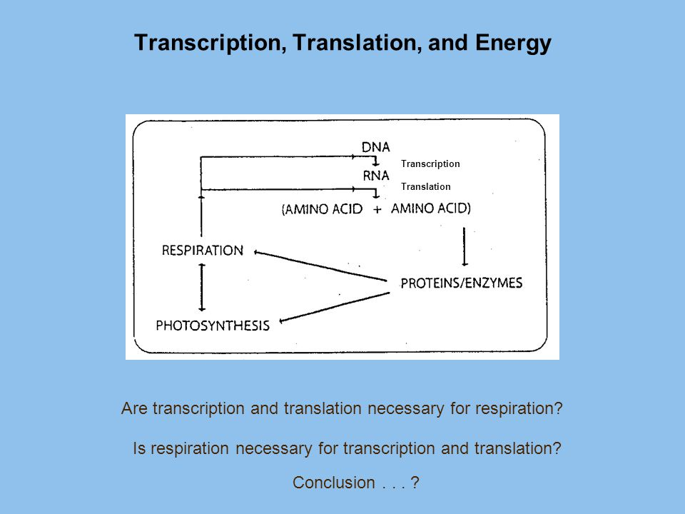 Transcription, Translation, and Energy