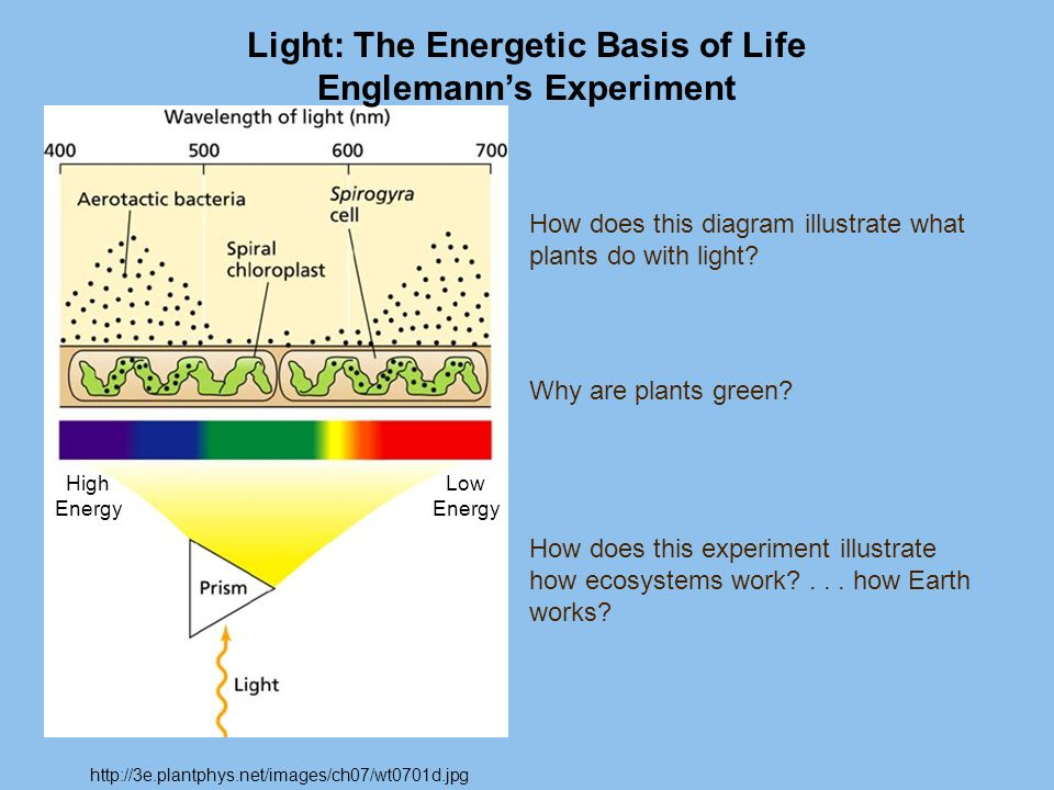 Light: The Energetic Basis of Life Englemann's Experiment