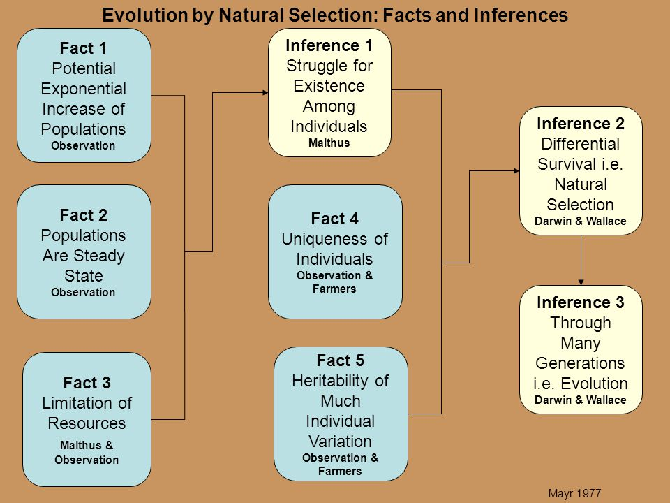 Evolution by Natural Selection: Facts and Inferences