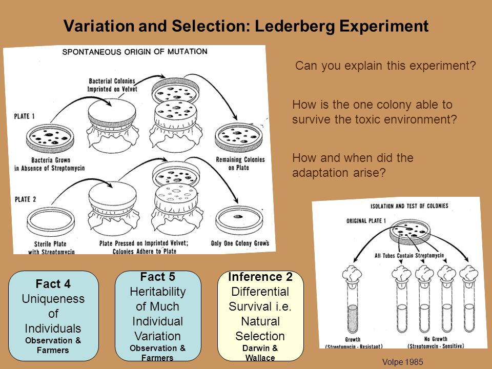 Variation and Selection: Lederberg Experiment