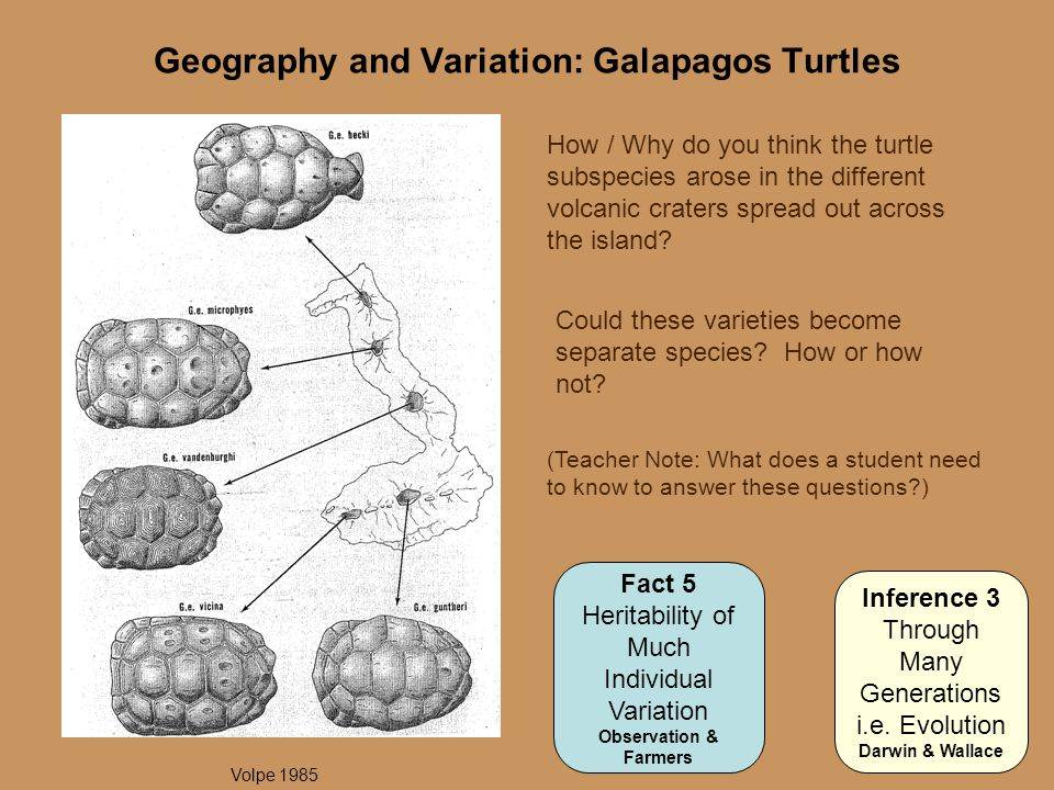 Geography and Variation: Galapagos Turtles