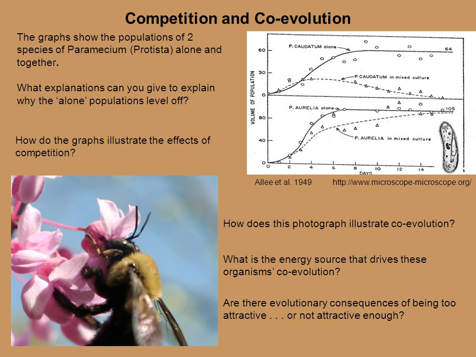 Competition and Co-evolution