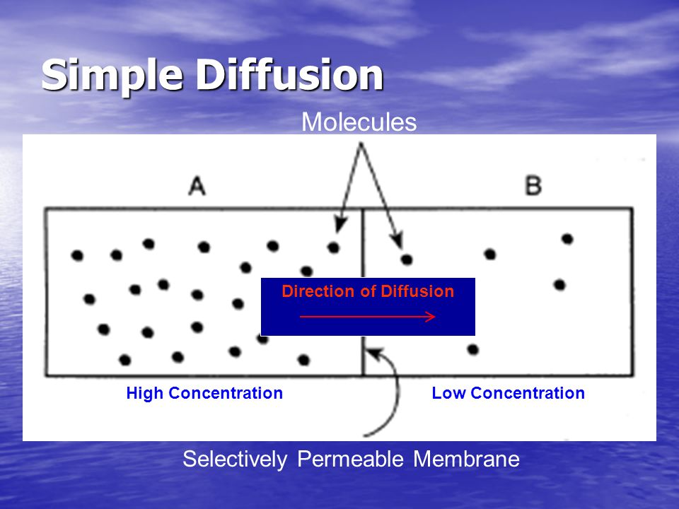 Direction of Diffusion