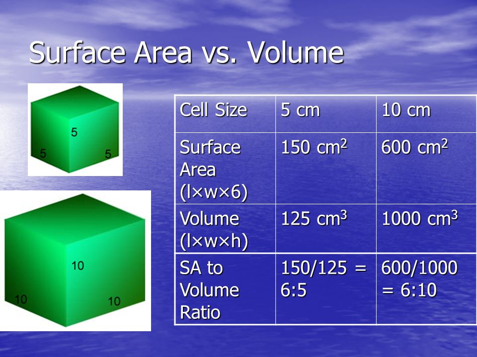 Surface Area vs. Volume Cell Size 5 cm 10 cm Surface Area (l×w×6)