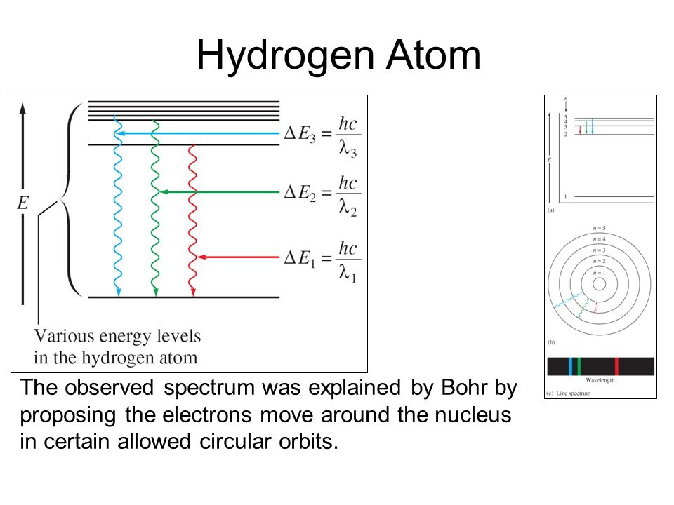 Hydrogen Atom The observed spectrum was explained by Bohr by proposing the electrons move around the nucleus in certain allowed circular orbits.