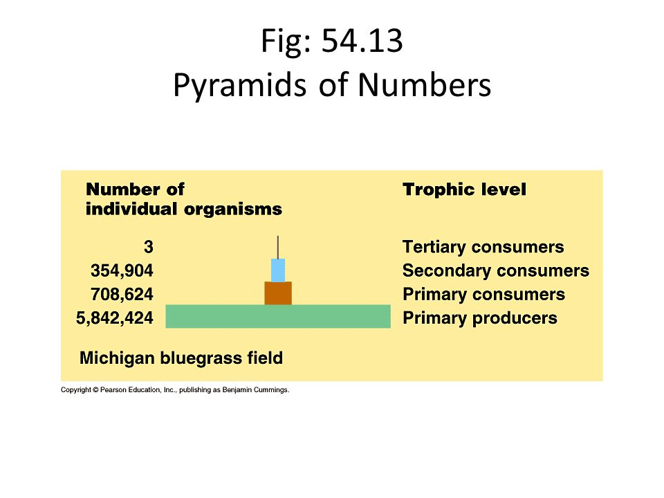 Fig: 54.13 Pyramids of Numbers