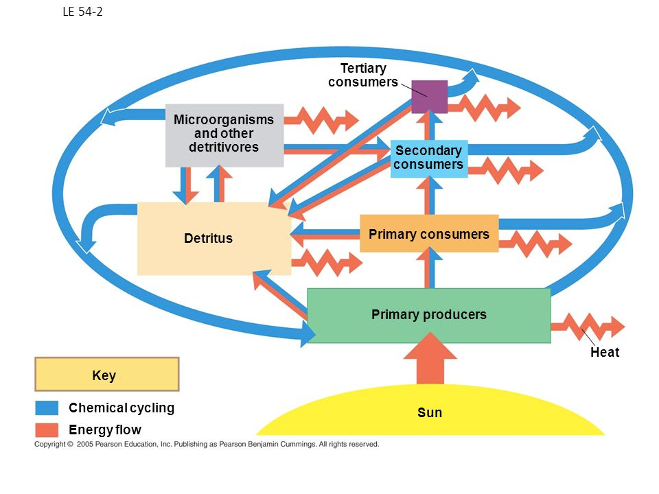 LE 54-2 Tertiary consumers Microorganisms and other detritivores