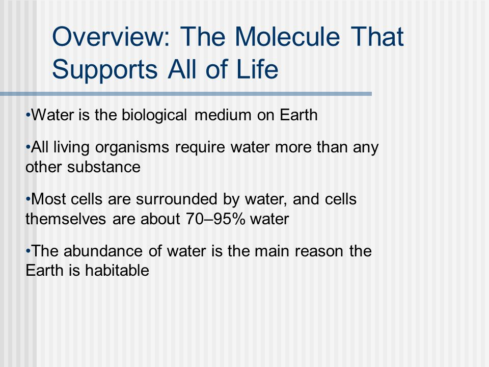 Overview: The Molecule That Supports All of Life