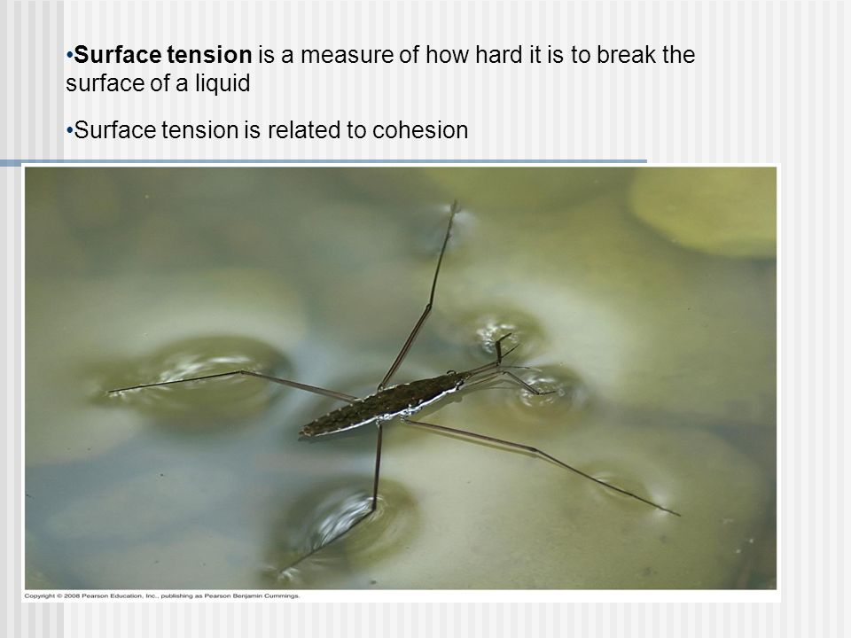 Surface tension is a measure of how hard it is to break the surface of a liquid
