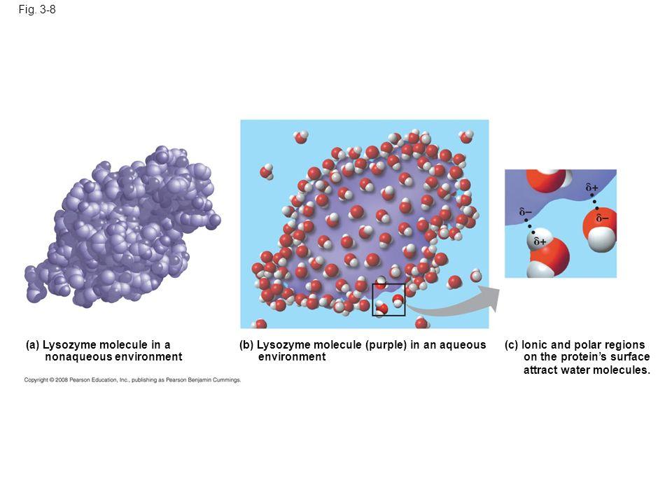 Fig. 3-8Figure 3.8 A water-soluble protein. (a) Lysozyme molecule in a. nonaqueous environment. (b) Lysozyme molecule (purple) in an aqueous.