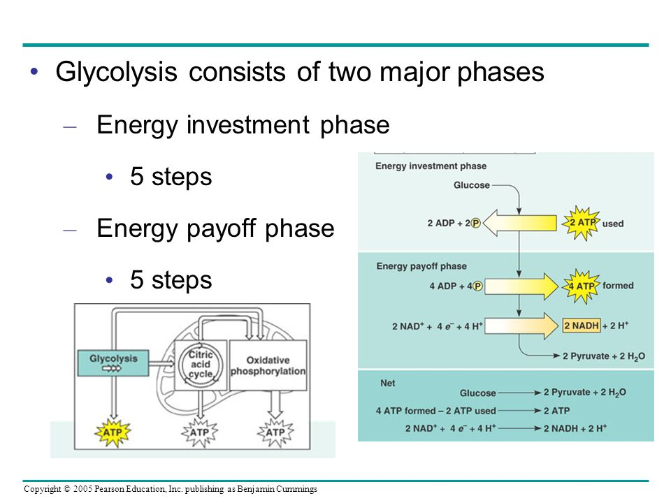 Glycolysis consists of two major phases