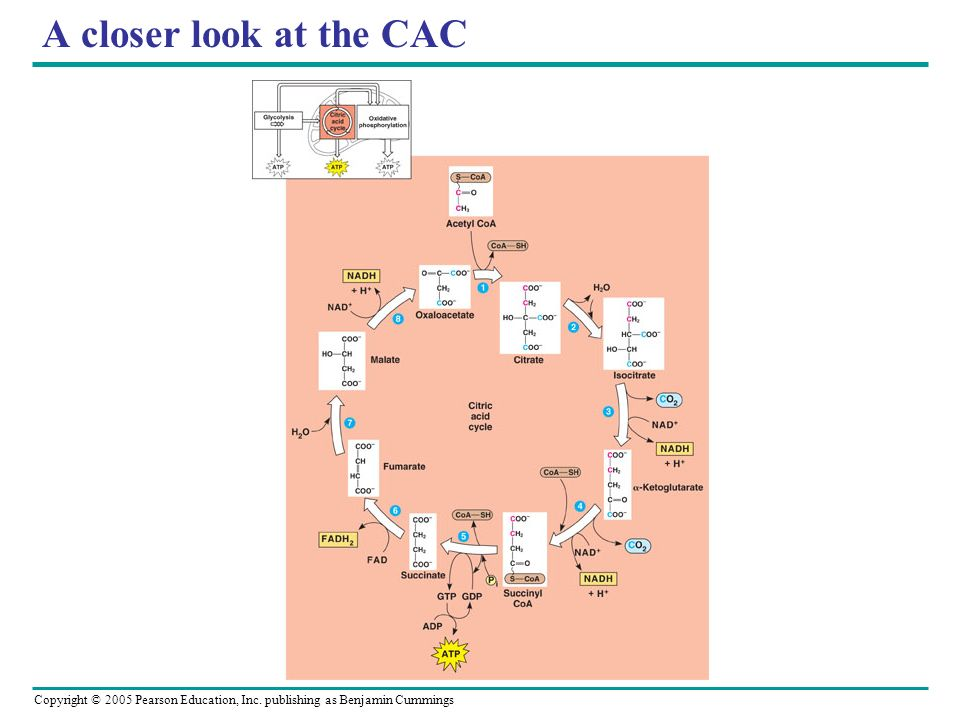 A closer look at the CAC
