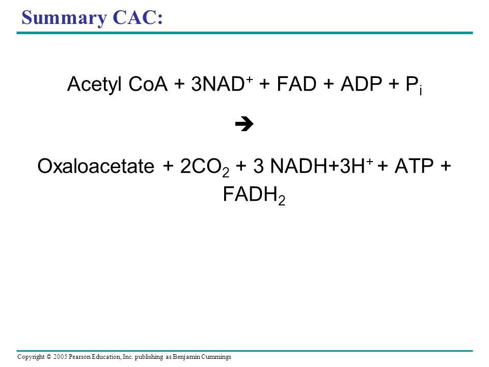 Acetyl CoA + 3NAD+ + FAD + ADP + Pi 