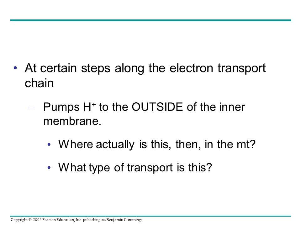 At certain steps along the electron transport chain