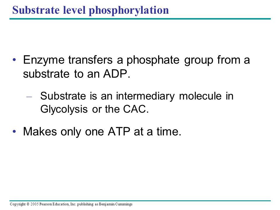 Substrate level phosphorylation