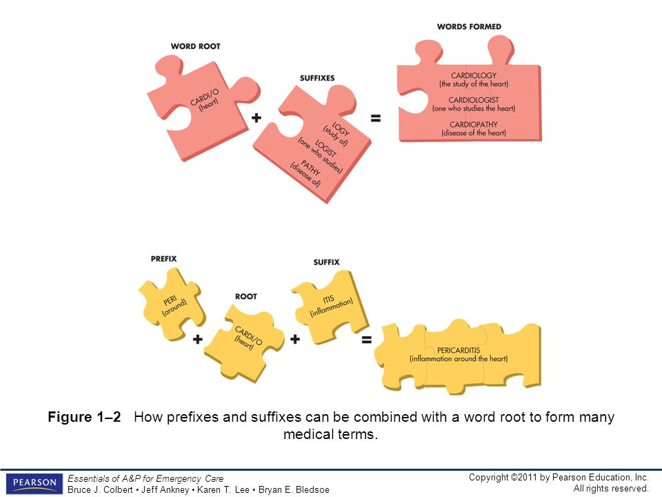 Figure 1–2 How prefixes and suffixes can be combined with a word root to form many medical terms.