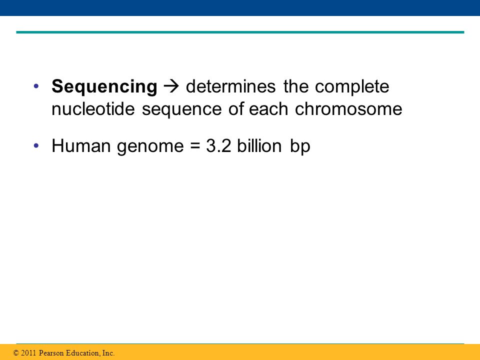 Human genome = 3.2 billion bp