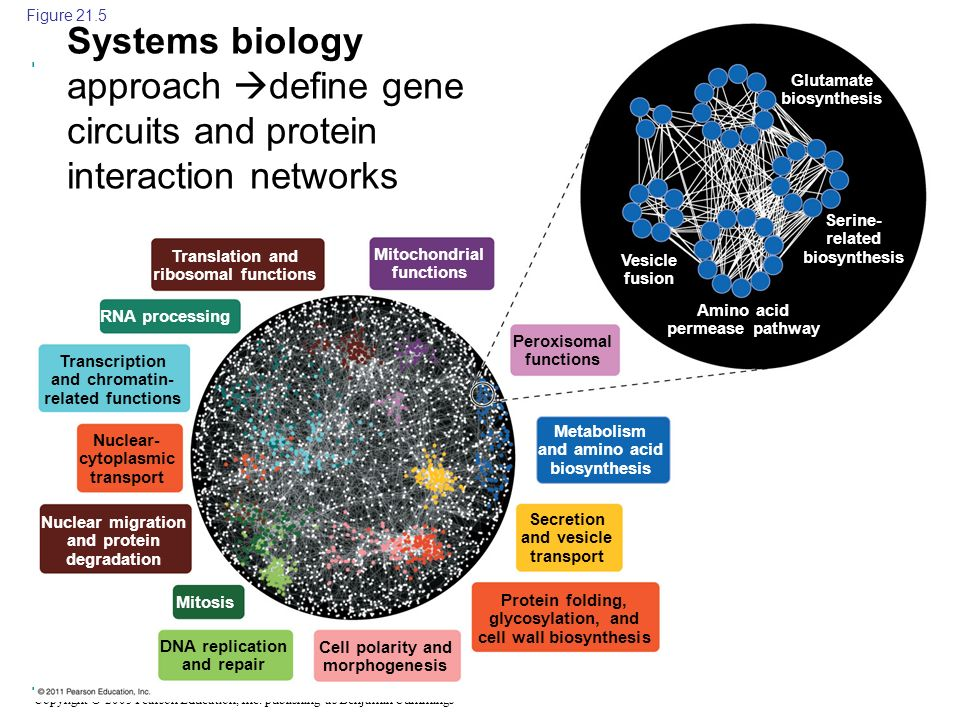 Figure 21.5 Systems biology approach define gene circuits and protein interaction networks. Glutamate biosynthesis.