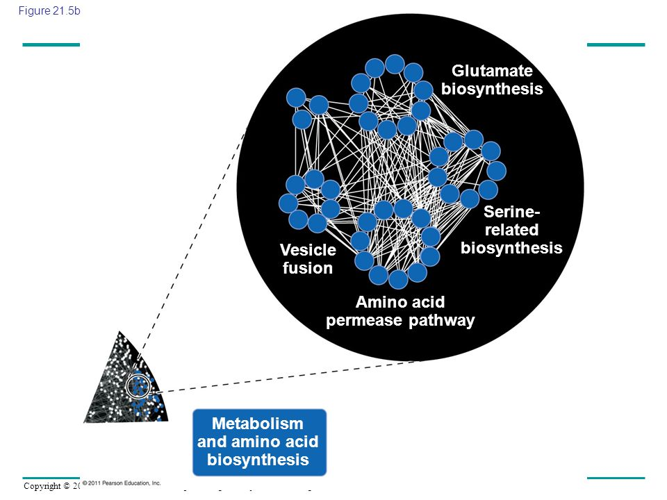 Glutamate biosynthesis