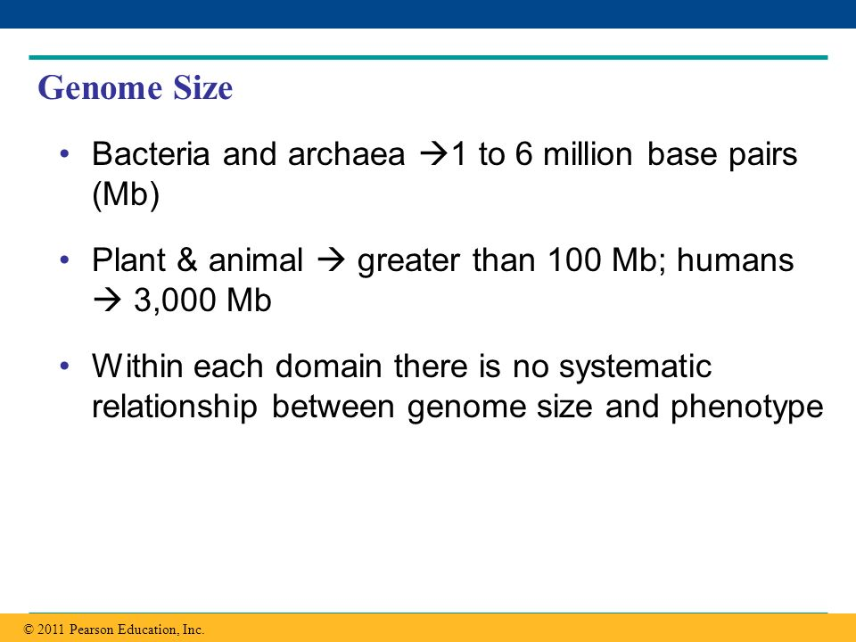 Genome Size Bacteria and archaea 1 to 6 million base pairs (Mb)